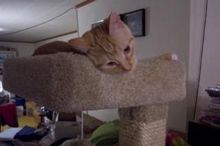 Pet in Penthouse