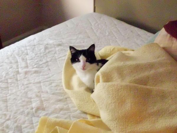 Snuggle kitty