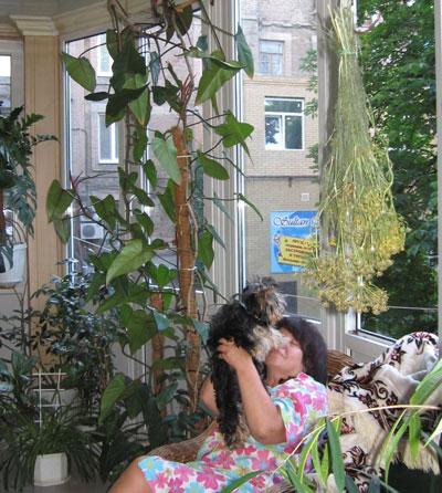 balkon-orangereya