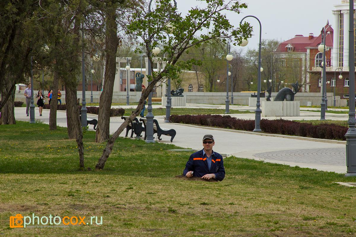 Городской тушканчик в Астрахани
