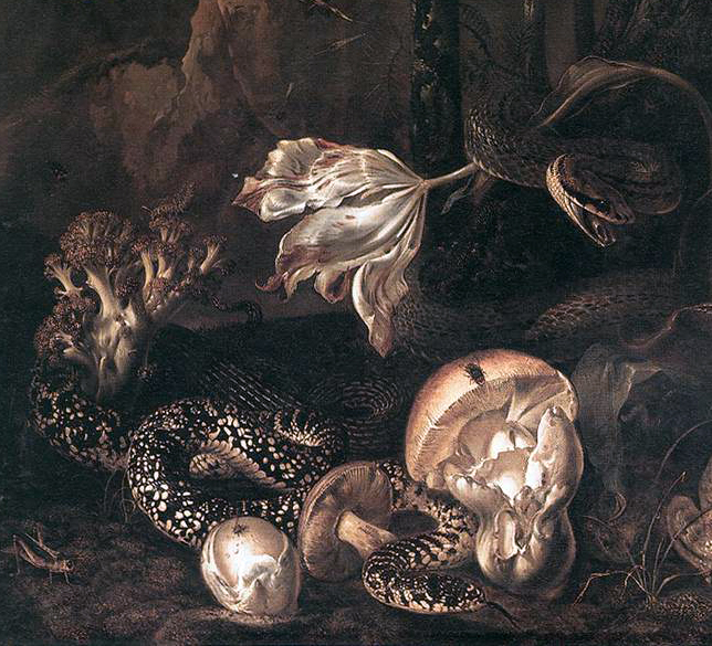 MARSEUS VAN SCHRIECK, Otto - Still-Life with Insects and Amphibians, 1662 3
