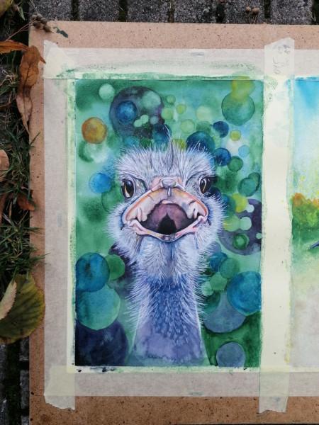 ostrich_1024px