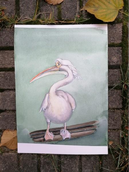 pelican_1222px