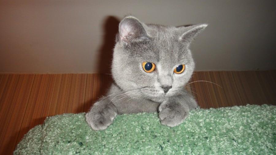 cat!!!