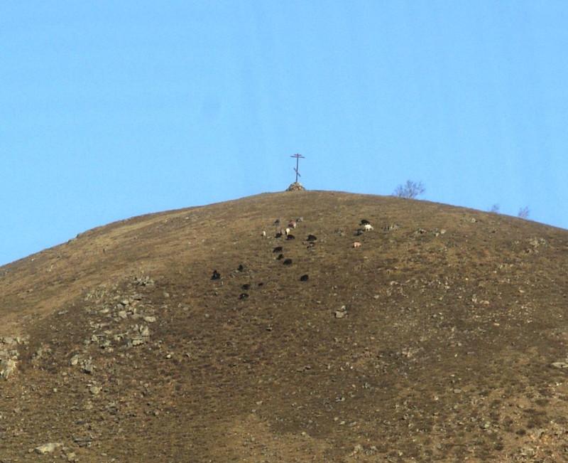 С утра козы поднимаются вверх почти до вершины, выискивают свежую траву. Недавно выпал снег, который на склоне растаял буквально за несколько часов...Около камней земля быстрее прогревается и травам хорошо расти.