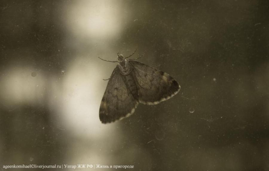 1. Бабочка