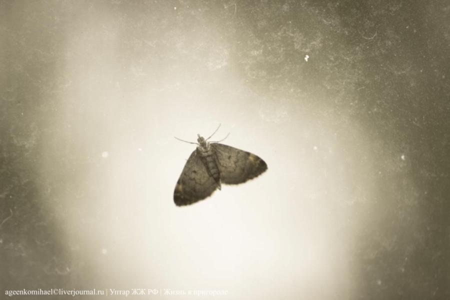 2.Бабочка