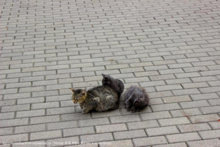 1. Кошка с котятами на площади
