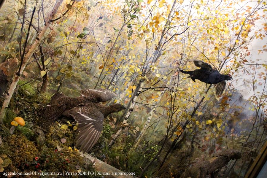 105. Лесные птицы