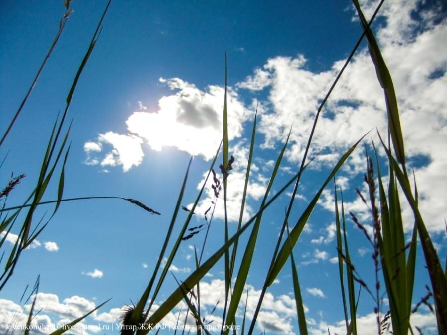 вид из травы на небо (2)