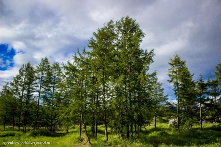природа (2 фото)