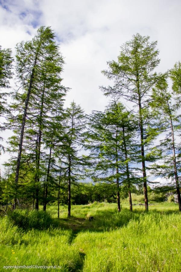 природа (3 фото)