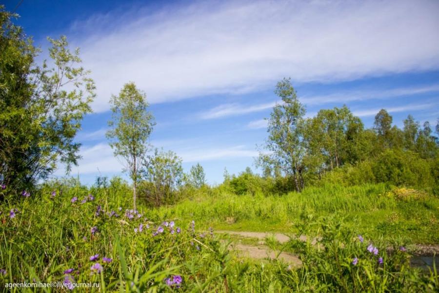 Цветы и лес
