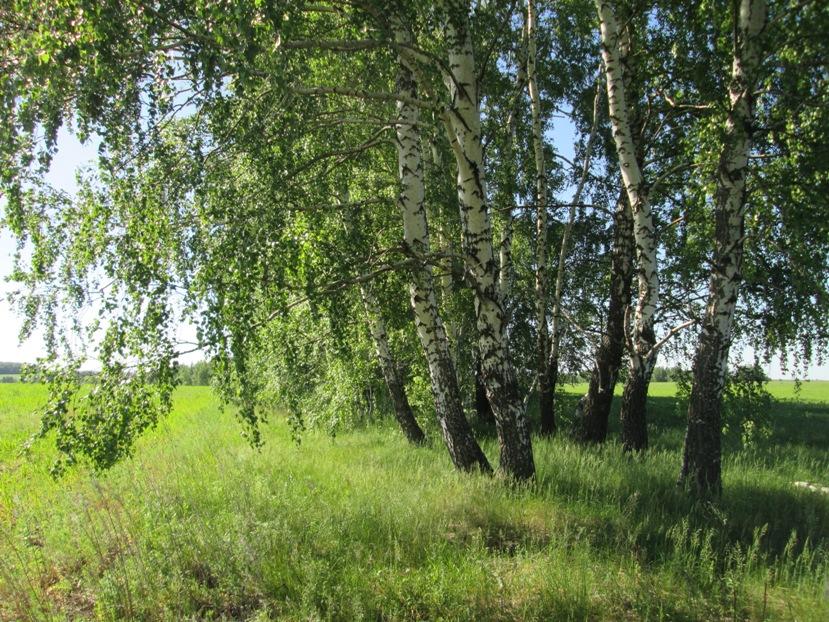 stepanovka-290518_04.JPG