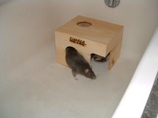 Rattie introductions part 3