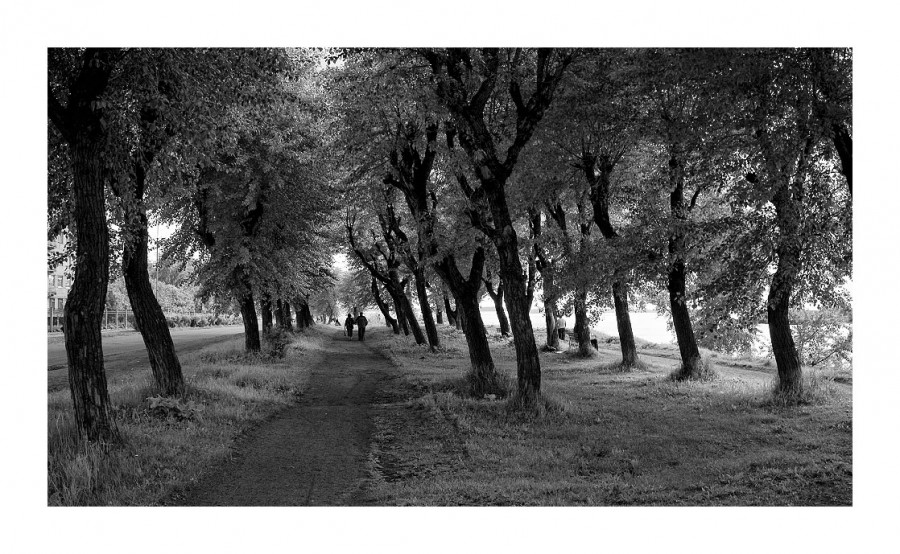 деревья 2