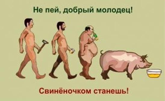 свинёночек