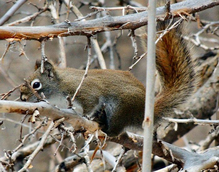 Squirrel3221.JPG