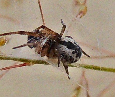 Spider9779.JPG