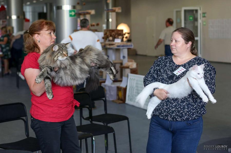 Городские кошки:Международная выставка кошек,17-18 августа 2019,Екатеринбург