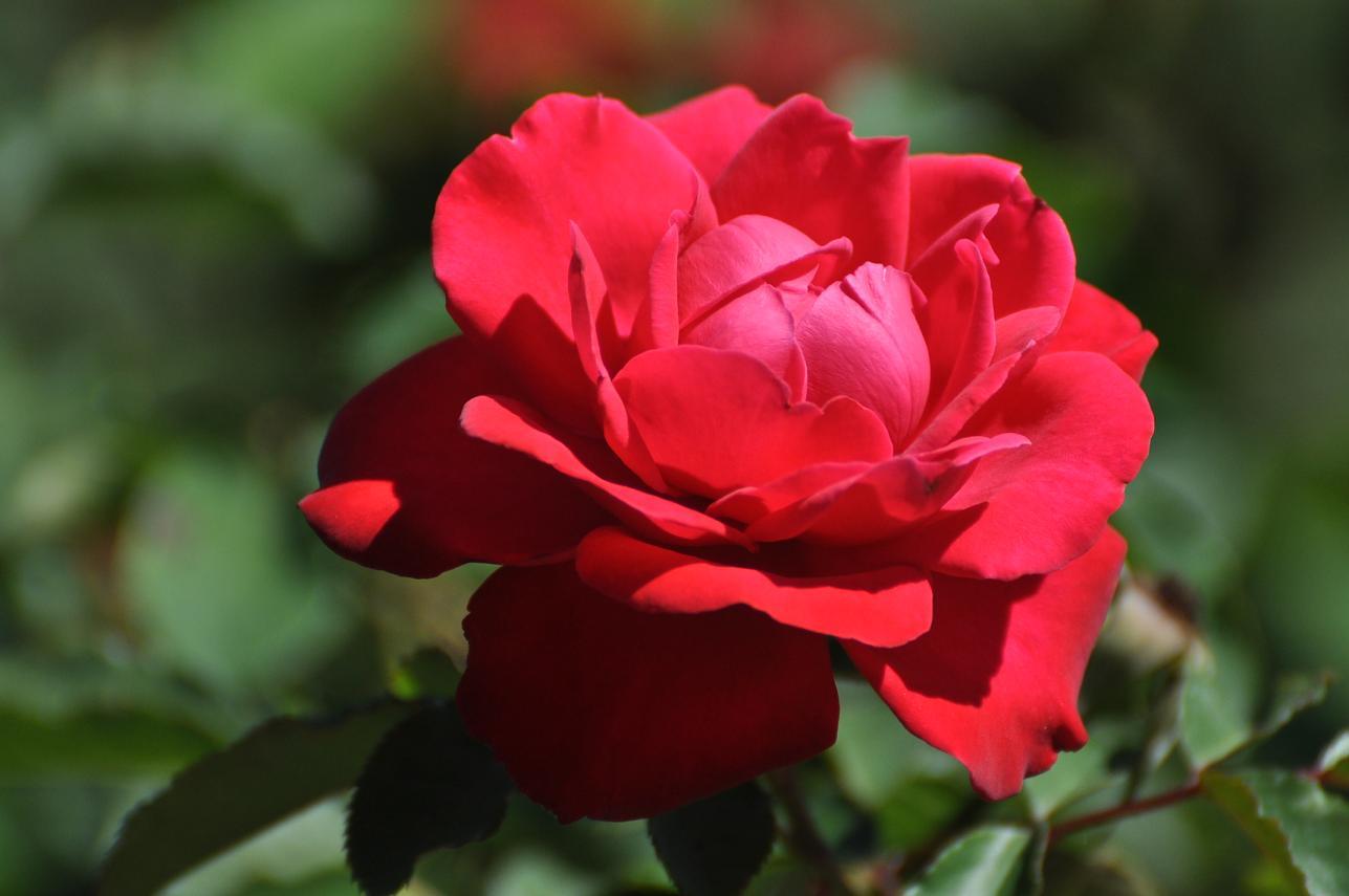 лучшие картинки цветов: