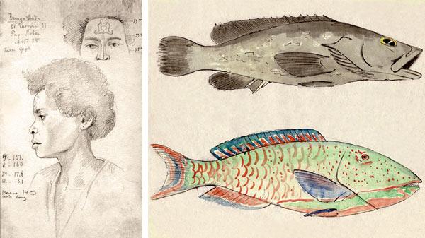 Рисунки Маклая