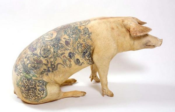 Татуировки на свиньях