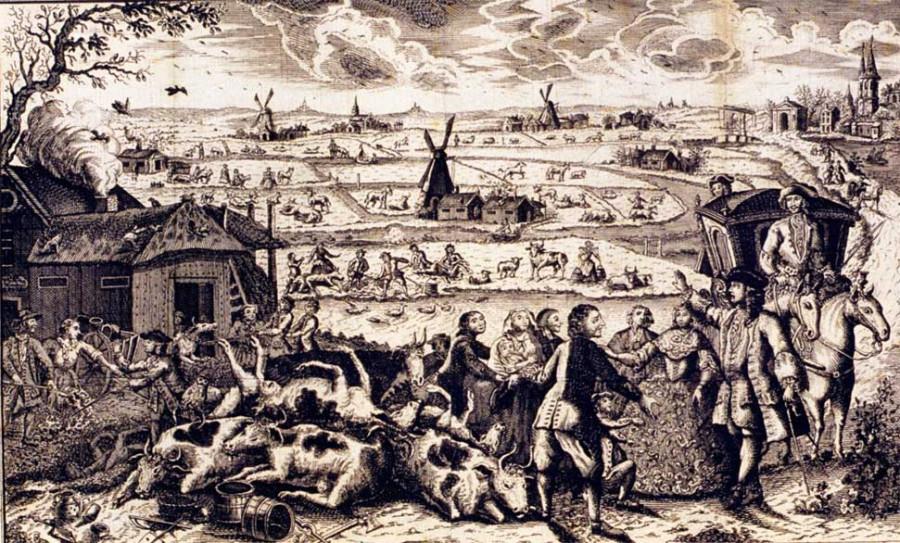 29 Чума крупоного рогатого скота в 18 веке в Нидерландах