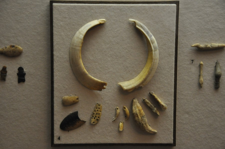 15 волоская культура клыки кабана