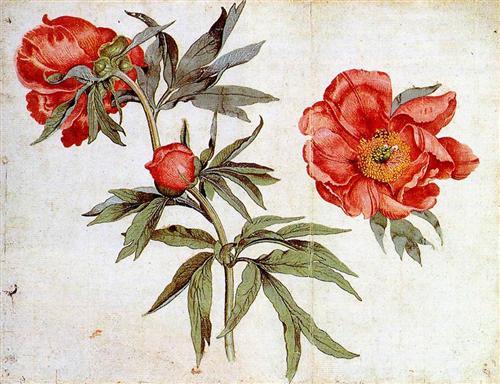 16 Мартин Шонгауэр 1495