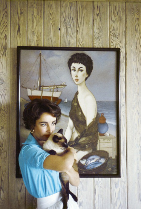 liz taylor and siamese cat