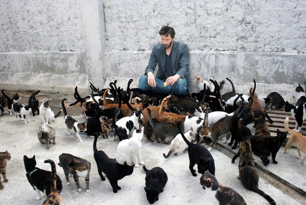 cats and keanu