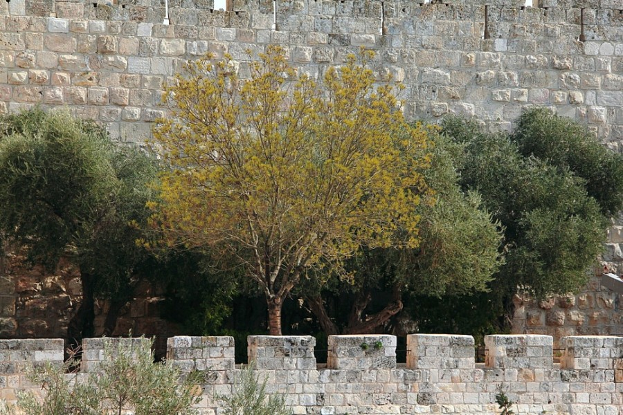 27 IMG_6931м Древние стены