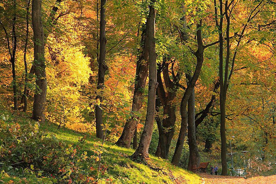 7 лес у горы Тымпа