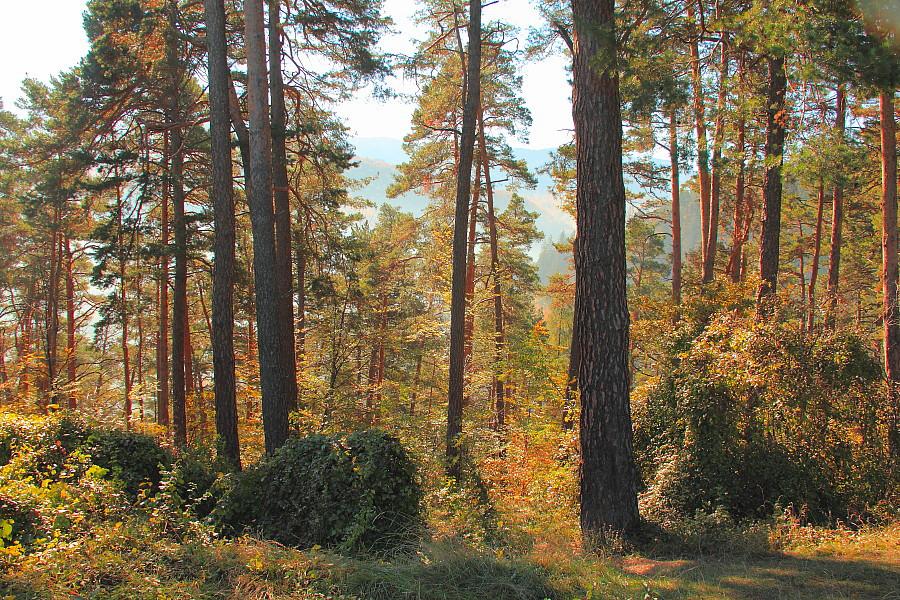 23 в лесу