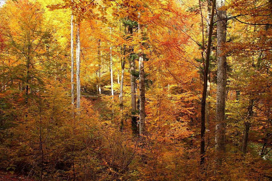 16 Золотая осень.DPP_96821104