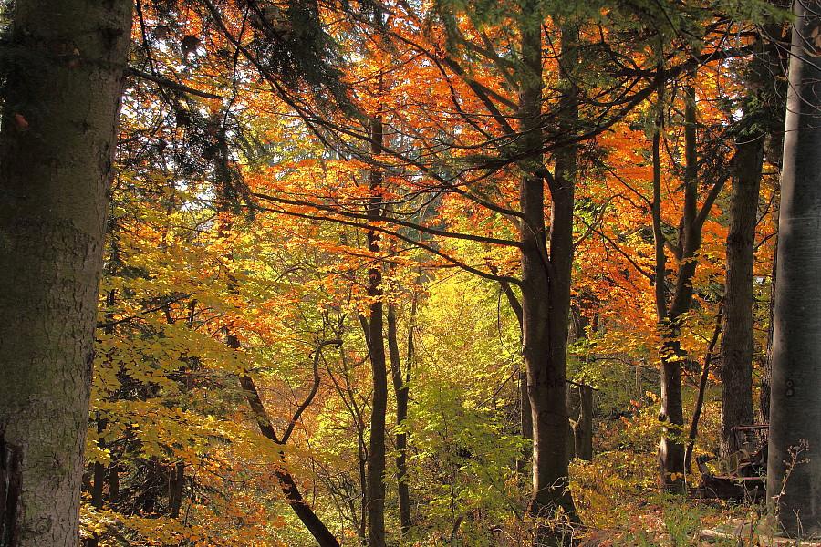 37 Осений лес.. DPP_96821136