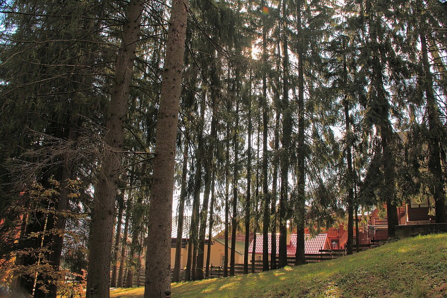 50 Хвоный лес.DPP_96821181