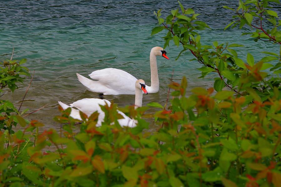 13 Лебединое озеро