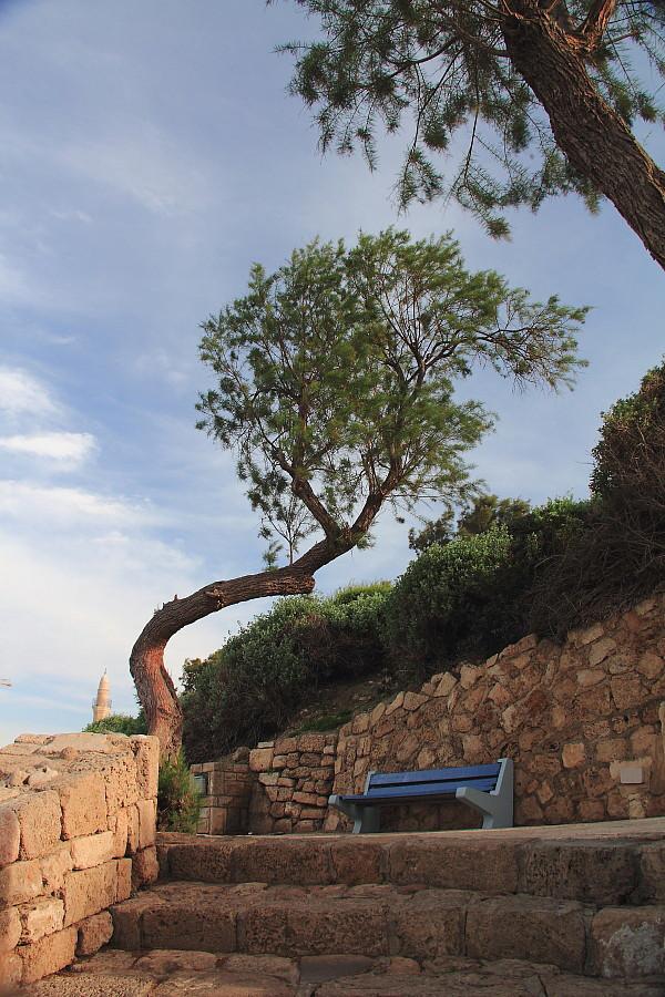26 Старое дерево.