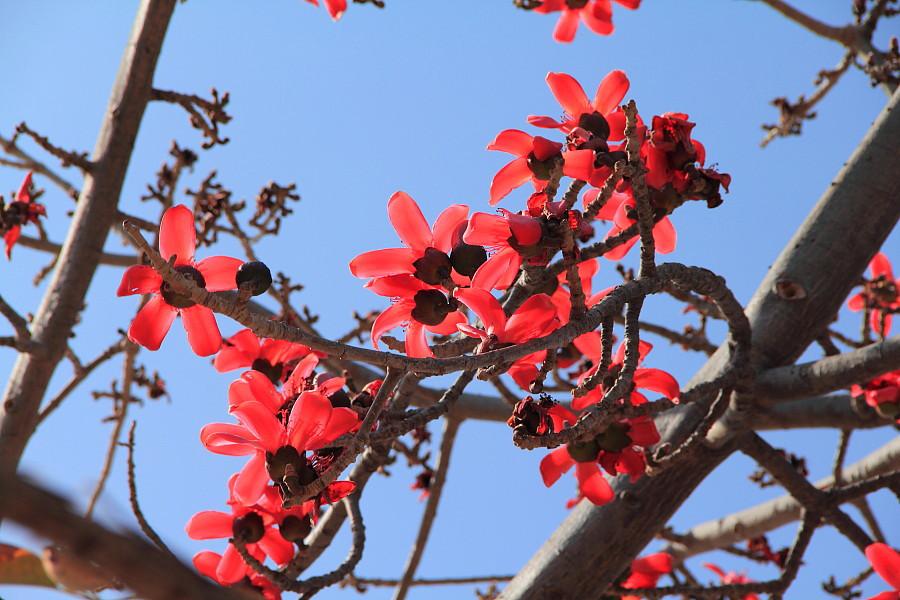 5 В парке цветут деревья