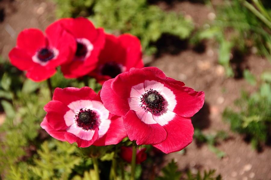 16 Цветы цветут