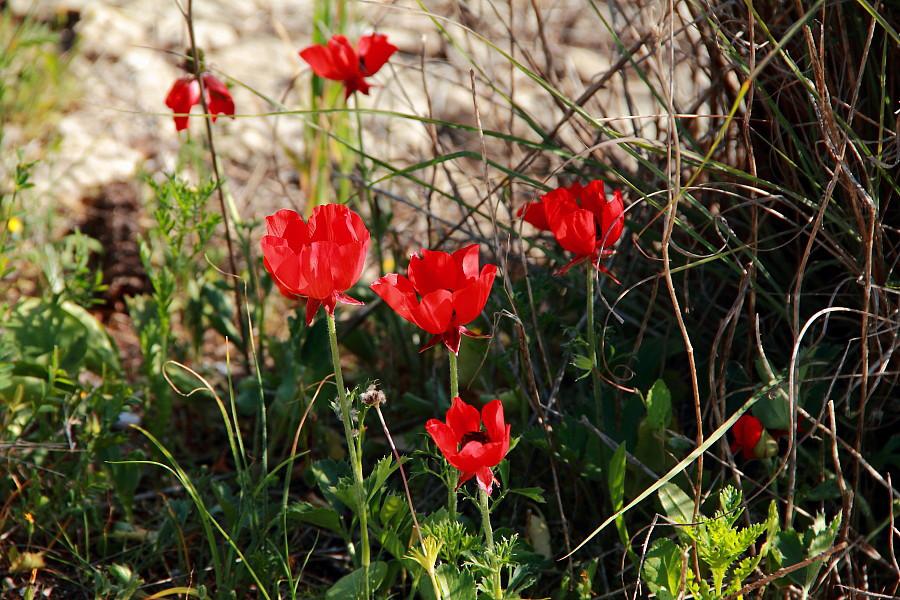 29 Красные цветки