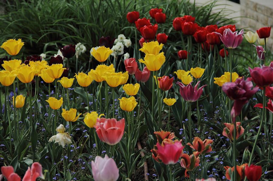 34 DPP_9682496 В Вавеле прекрасные цветники