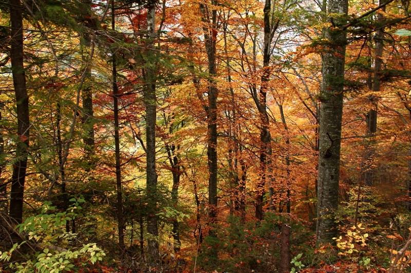 DPP_014 Осенний лес