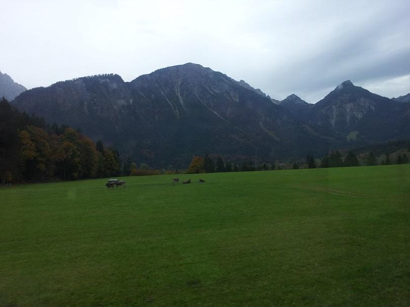7 На альпийских лугах ь