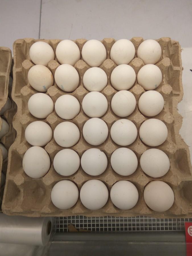Без одного яйца.jpg