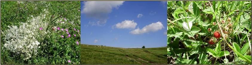 Ягоды и травы на яйле