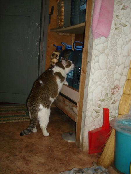 кошка пьет