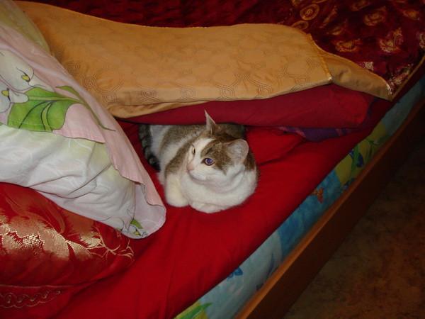кошка утром после удаления зуба